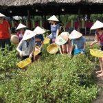 Phú Quốc: Phát triển mô hình nông nghiệp sinh thái gắn với du lịch